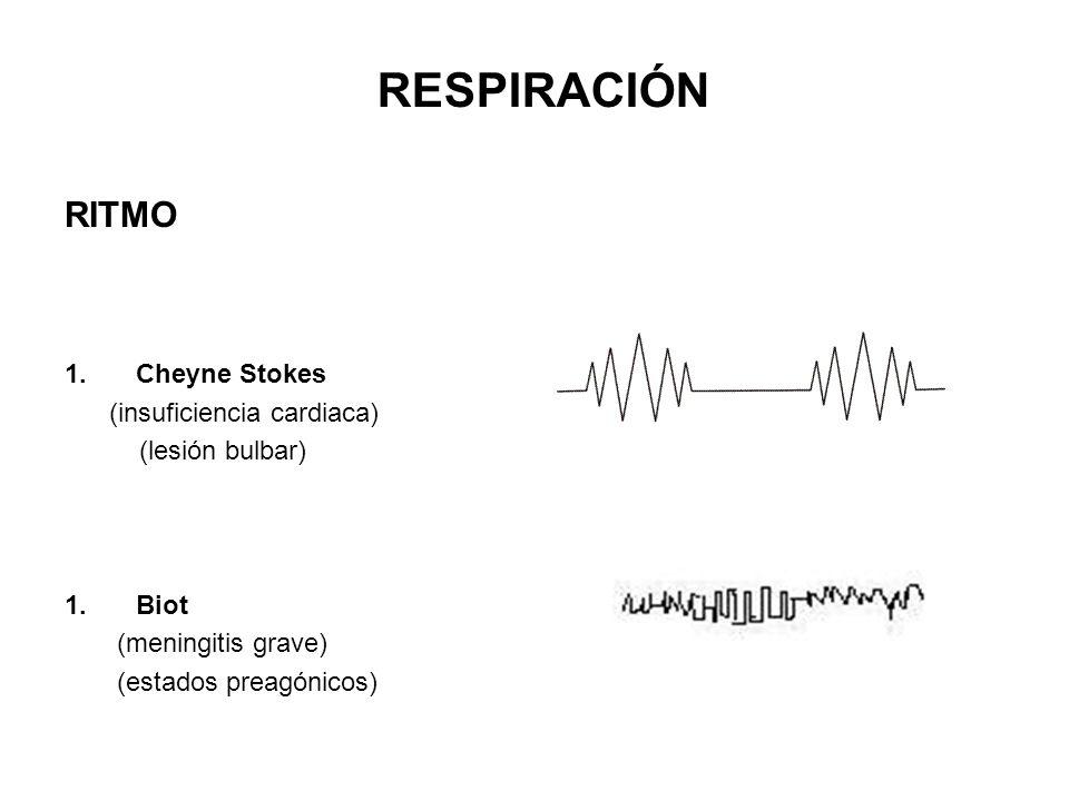 RESPIRACIÓN RITMO Cheyne Stokes (insuficiencia cardiaca)