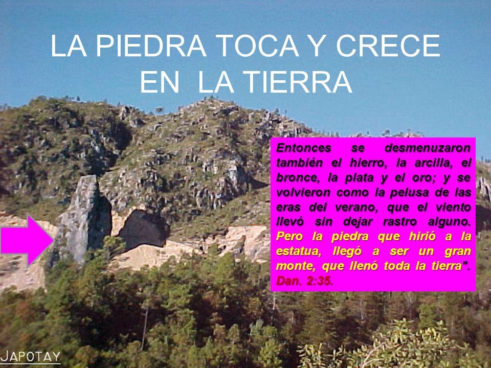 LA PIEDRA TOCA Y CRECE EN LA TIERRA