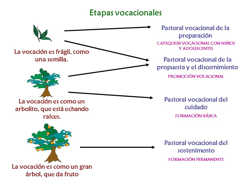 Etapas vocacionales Pastoral vocacional de la preparación