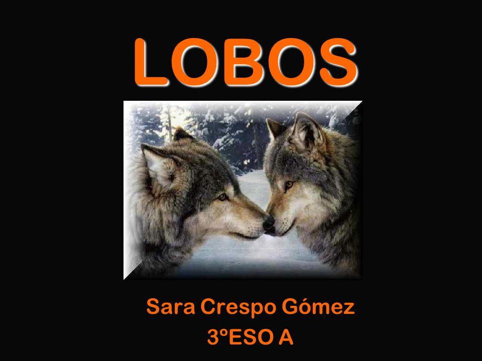 Sara Crespo Gómez 3ºESO A