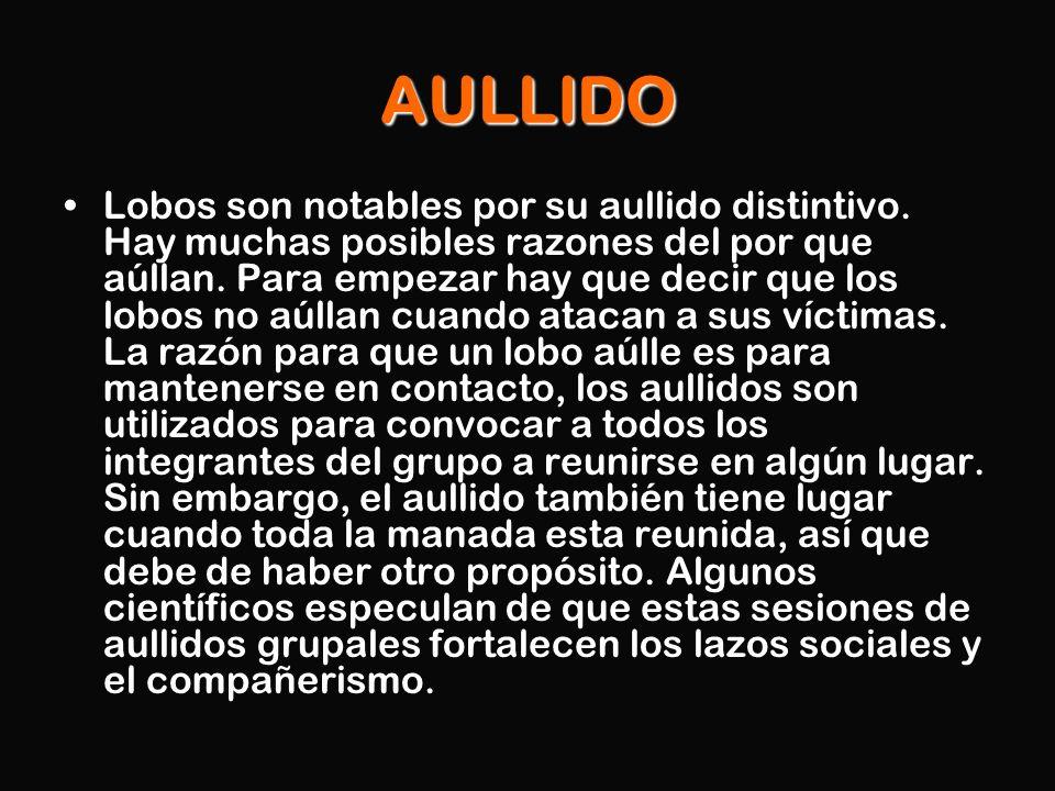AULLIDO