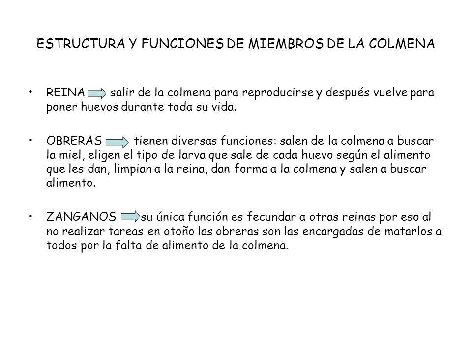ESTRUCTURA Y FUNCIONES DE MIEMBROS DE LA COLMENA