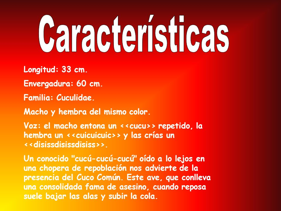 Características Longitud: 33 cm. Envergadura: 60 cm.