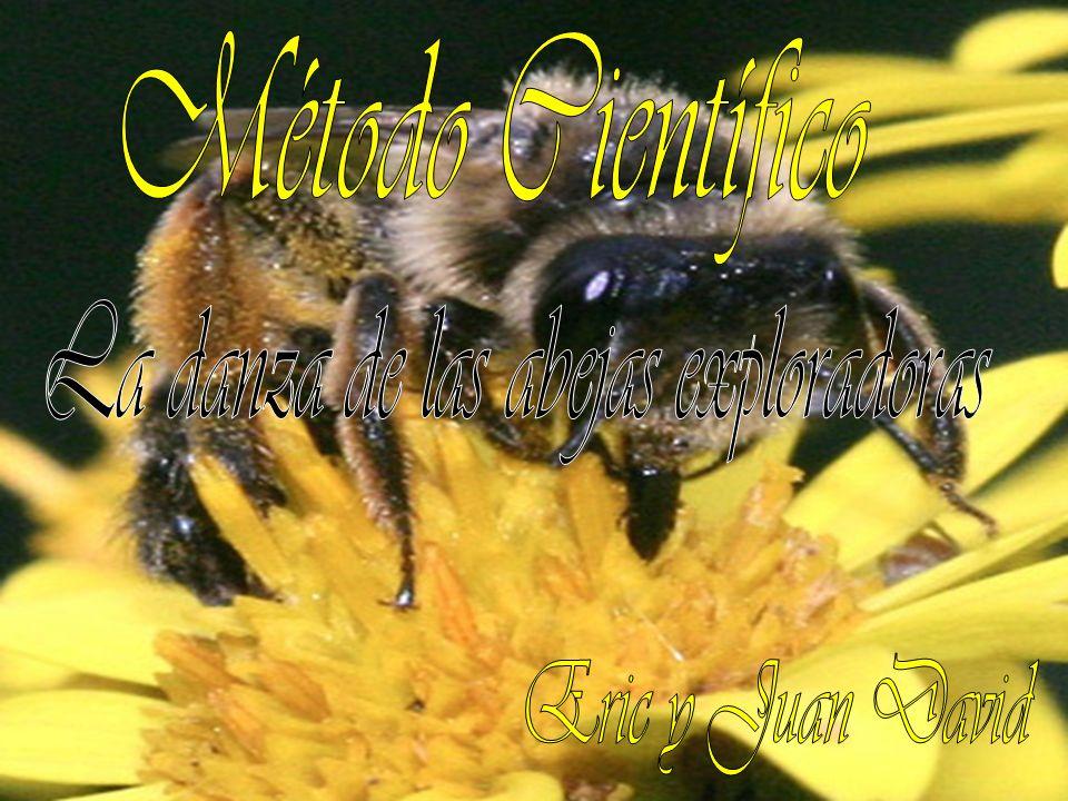 La danza de las abejas exploradoras