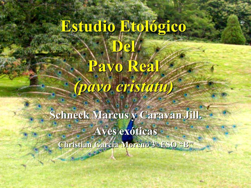 Estudio Etológico Del Pavo Real (pavo cristatu)