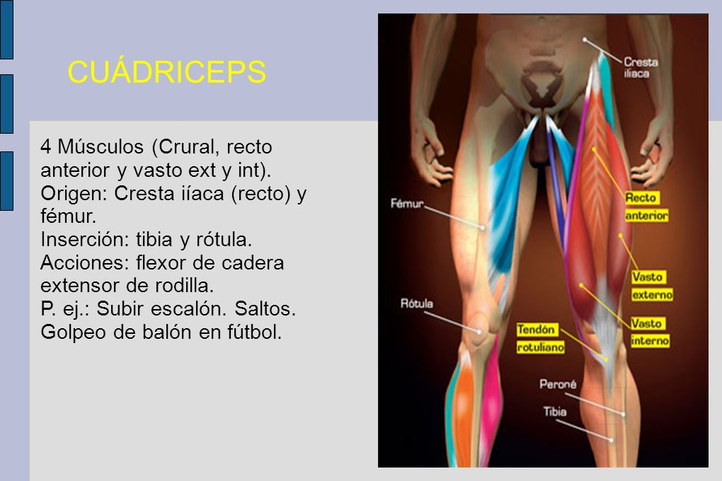 CUÁDRICEPS 4 Músculos (Crural, recto anterior y vasto ext y int).