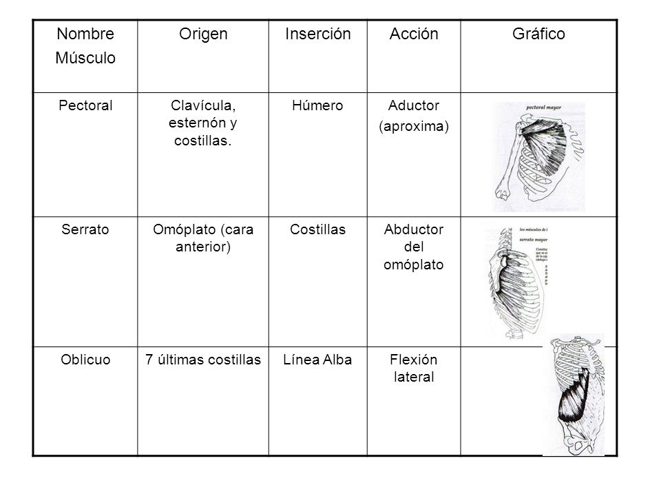 Nombre Músculo Origen Inserción Acción Gráfico Pectoral