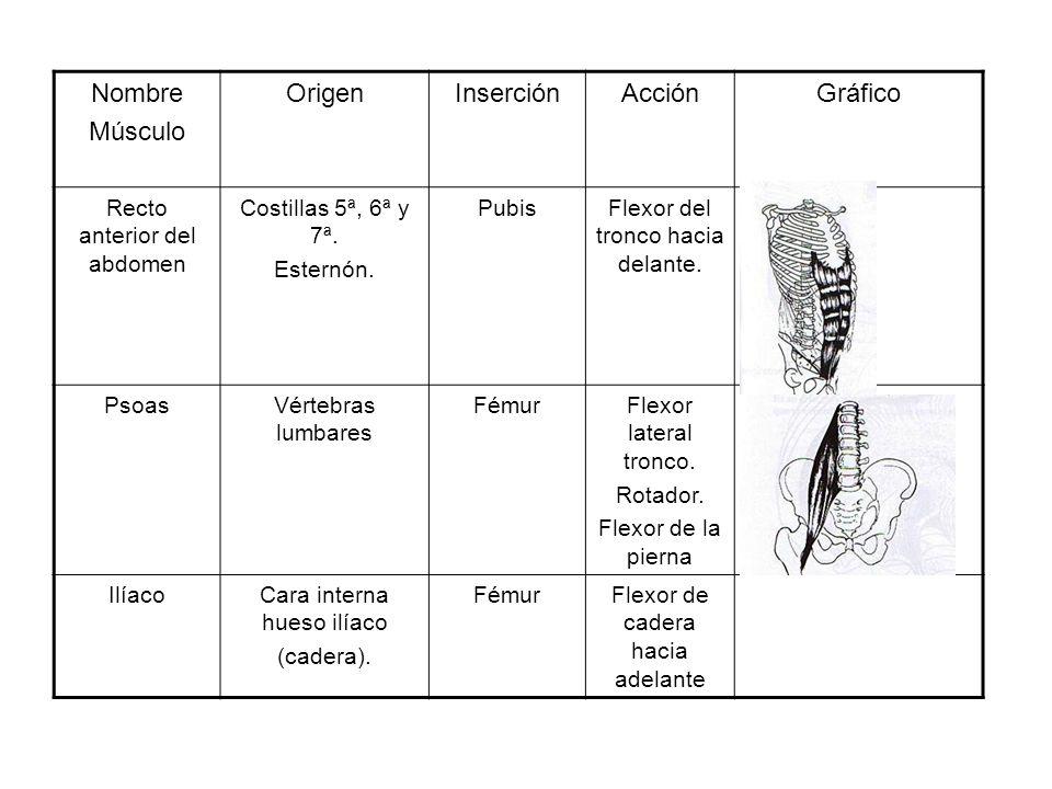 Nombre Músculo Origen Inserción Acción Gráfico