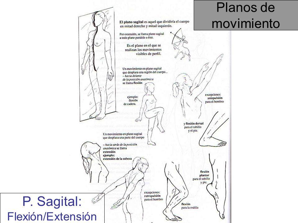 P. Sagital: Flexión/Extensión