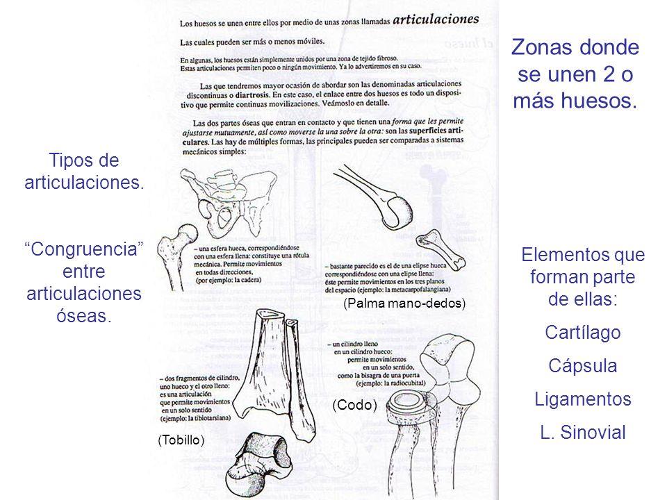 Zonas donde se unen 2 o más huesos.