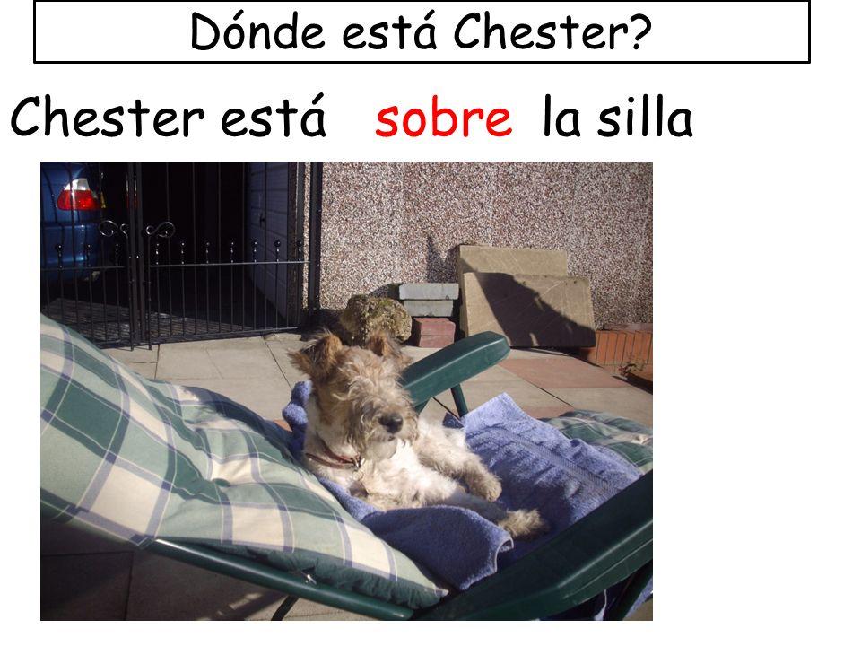 Dónde está Chester Chester está sobre la silla