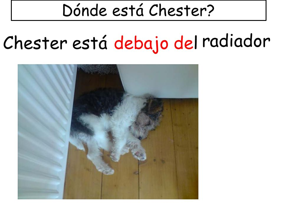 Dónde está Chester radiador Chester está debajo del