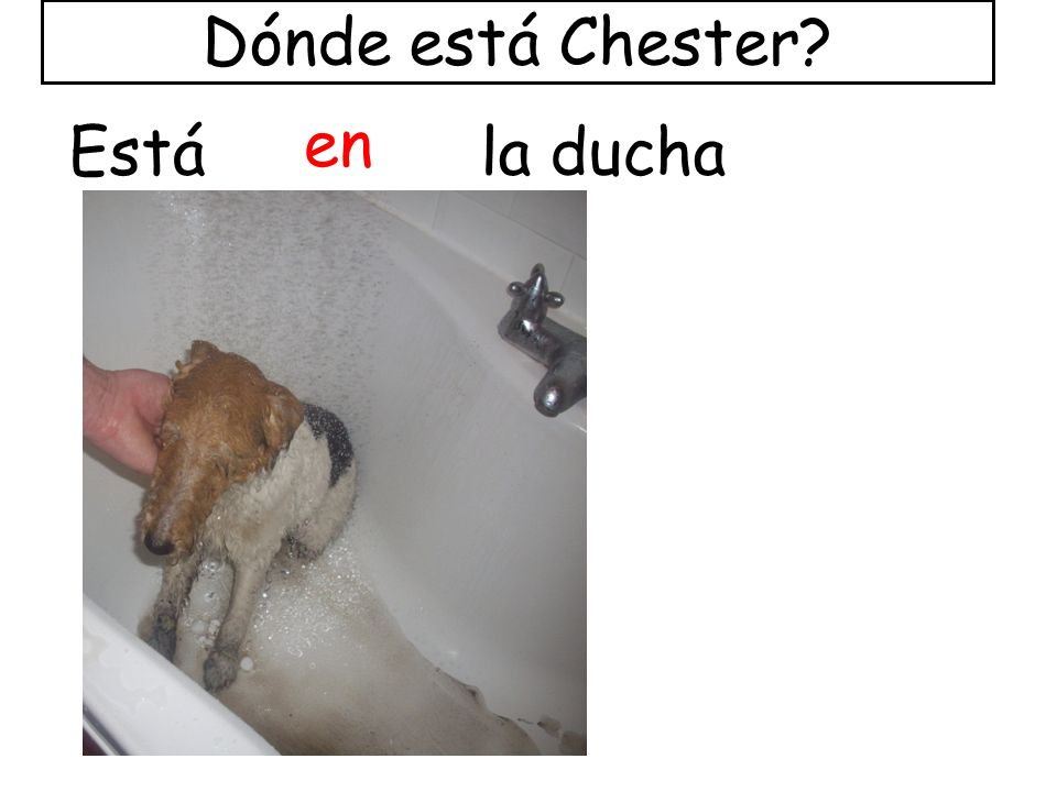 Dónde está Chester en Está la ducha
