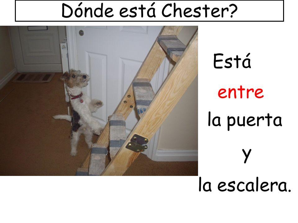Dónde está Chester Está entre la puerta y la escalera.