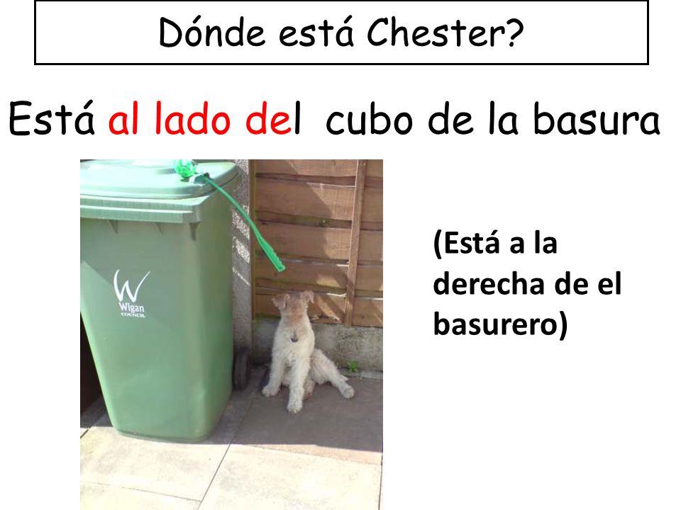 Está al lado del cubo de la basura Dónde está Chester