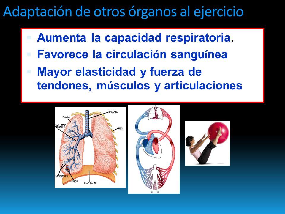Adaptación de otros órganos al ejercicio