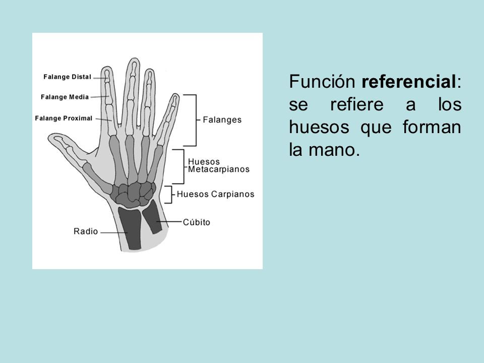 Función referencial: se refiere a los huesos que forman la mano.