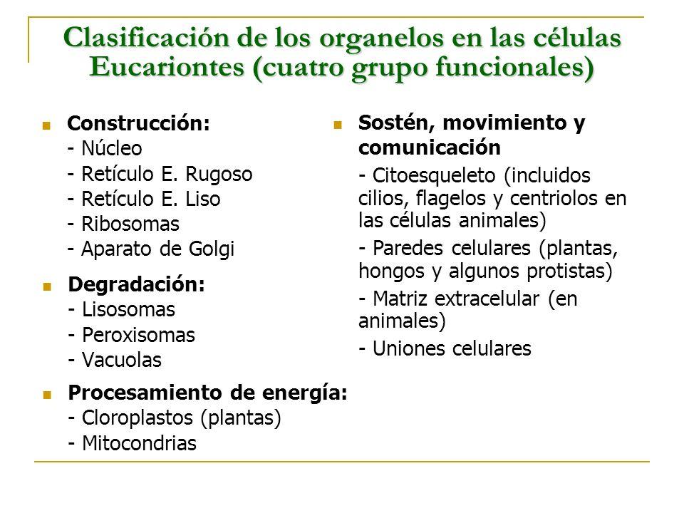 Clasificación de los organelos en las células Eucariontes (cuatro grupo funcionales)