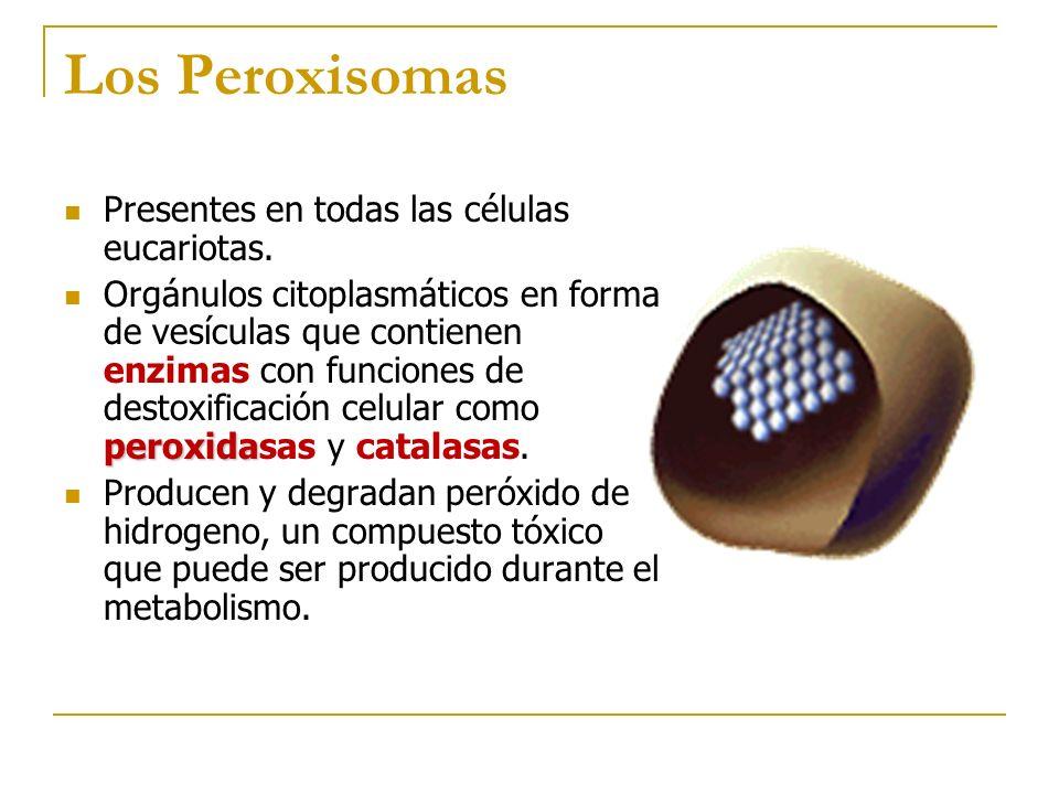 Los Peroxisomas Presentes en todas las células eucariotas.