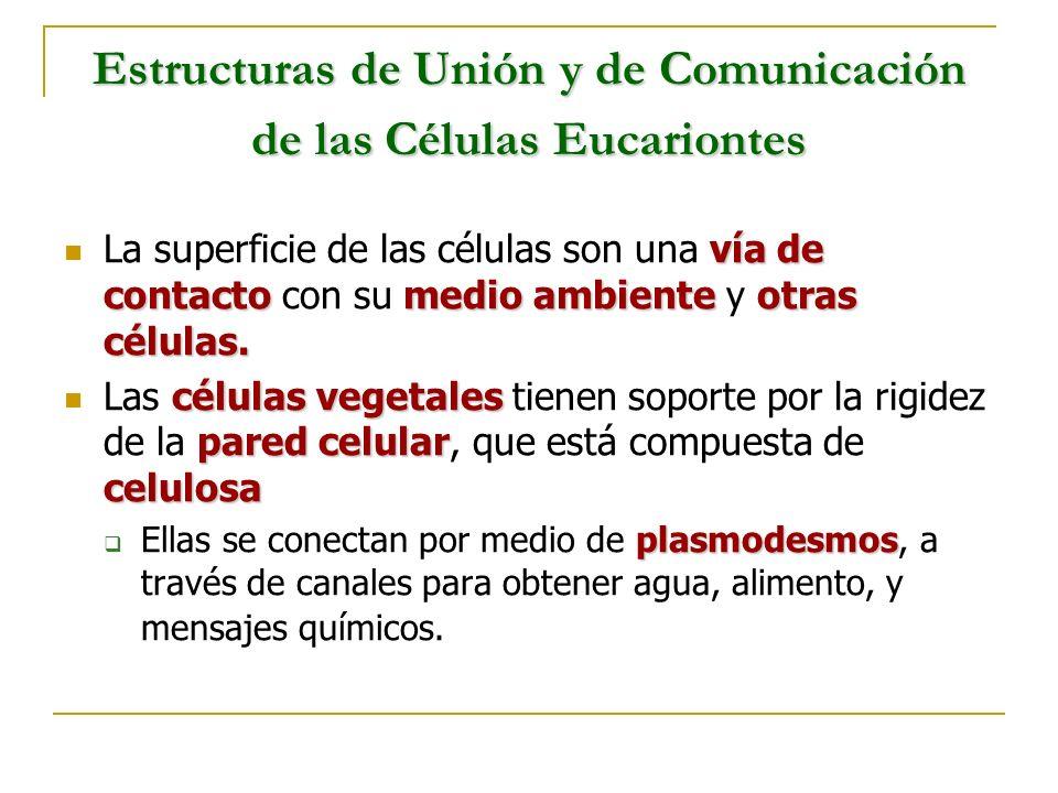 Estructuras de Unión y de Comunicación de las Células Eucariontes