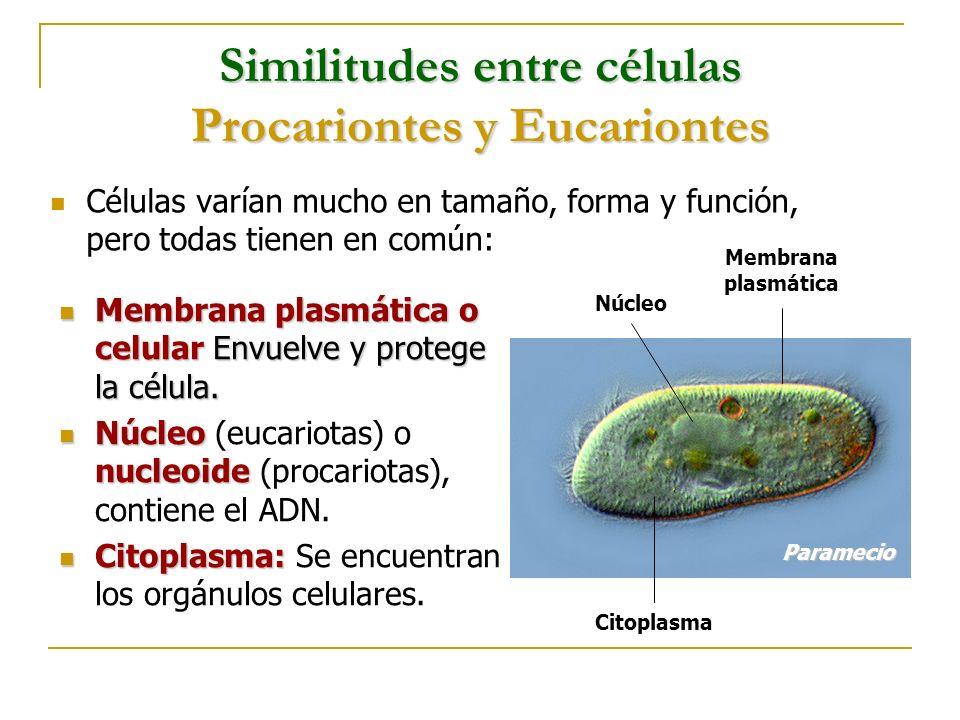 Similitudes entre células Procariontes y Eucariontes