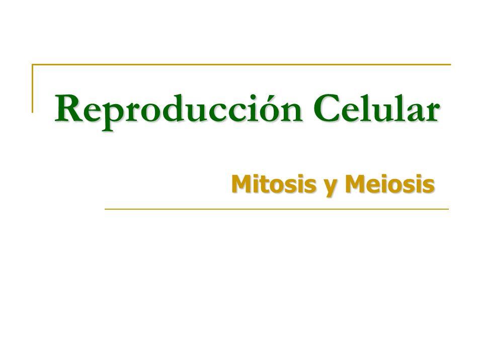 Reproducción Celular Mitosis y Meiosis