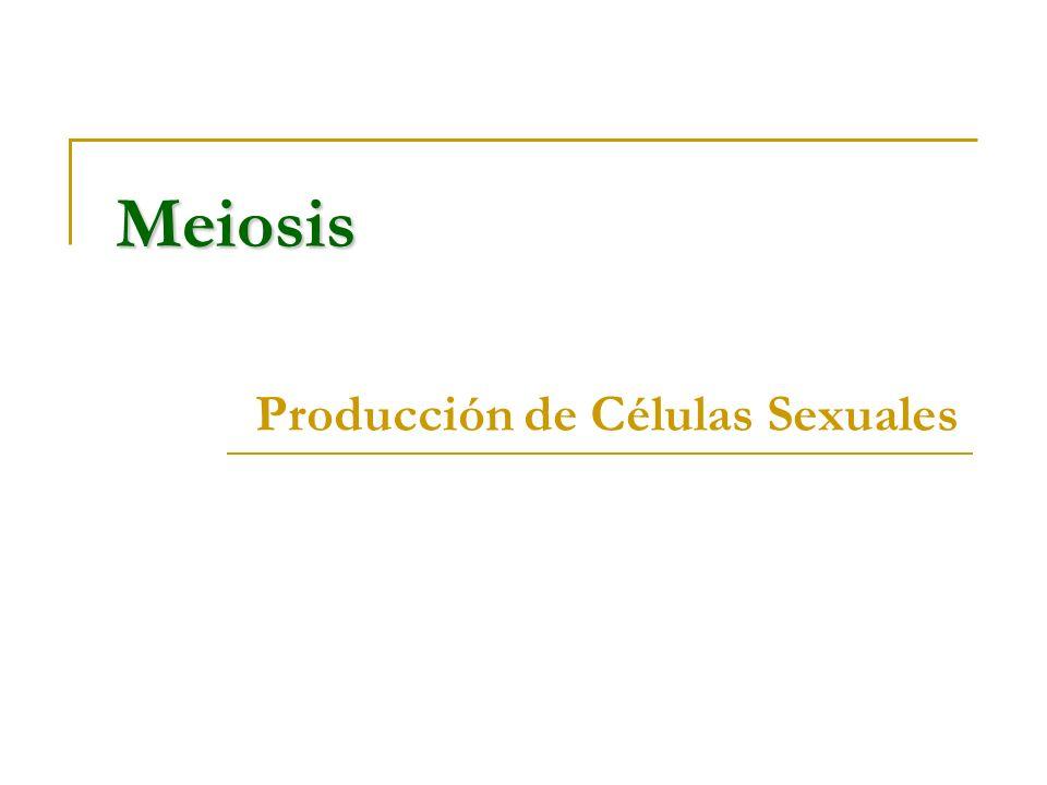 Meiosis Producción de Células Sexuales