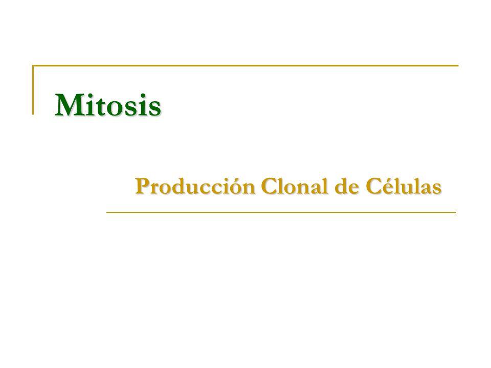 Producción Clonal de Células