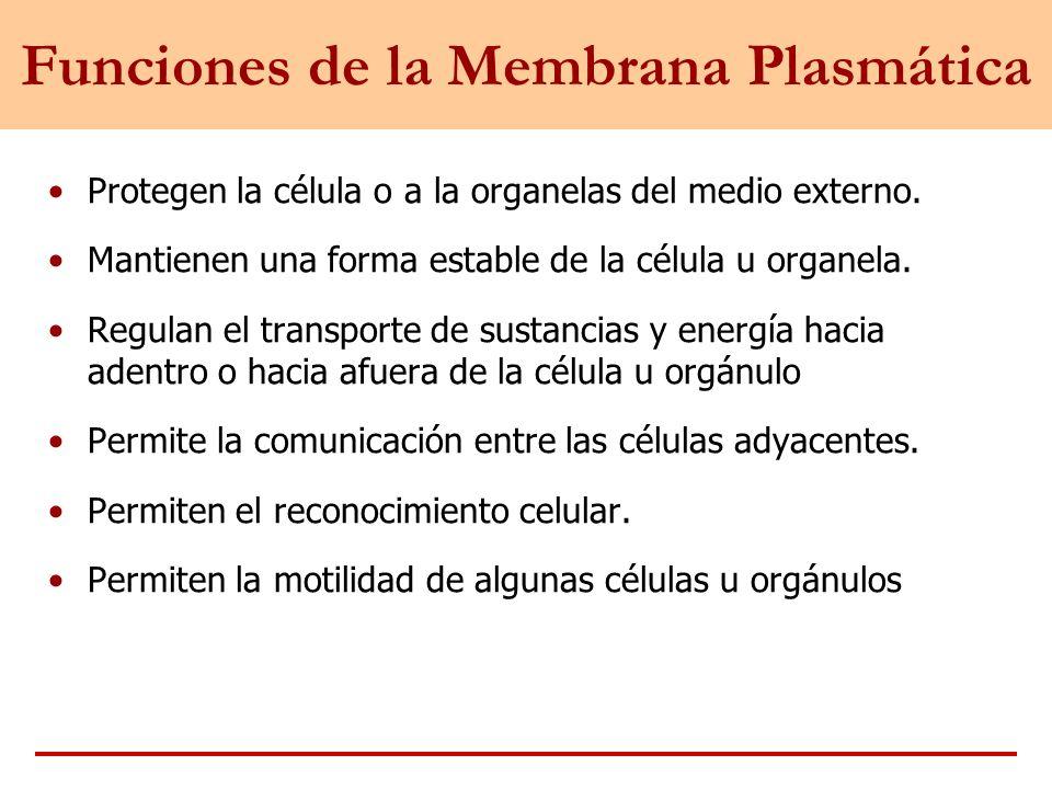 Funciones de la Membrana Plasmática