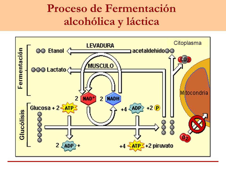 Proceso de Fermentación alcohólica y láctica