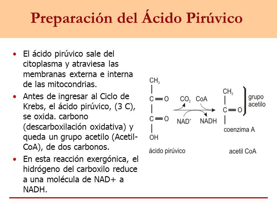 Preparación del Ácido Pirúvico