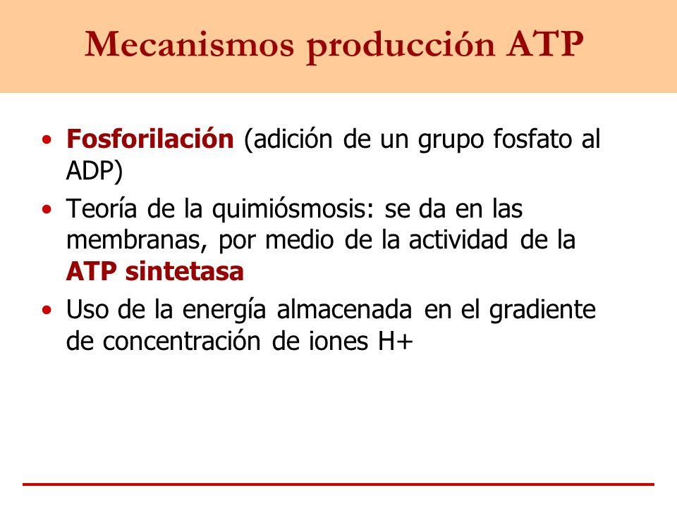 Mecanismos producción ATP
