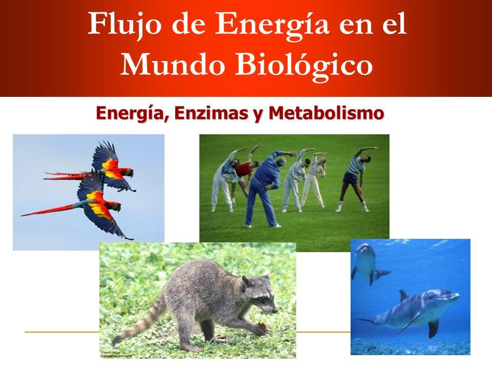Flujo de Energía en el Mundo Biológico