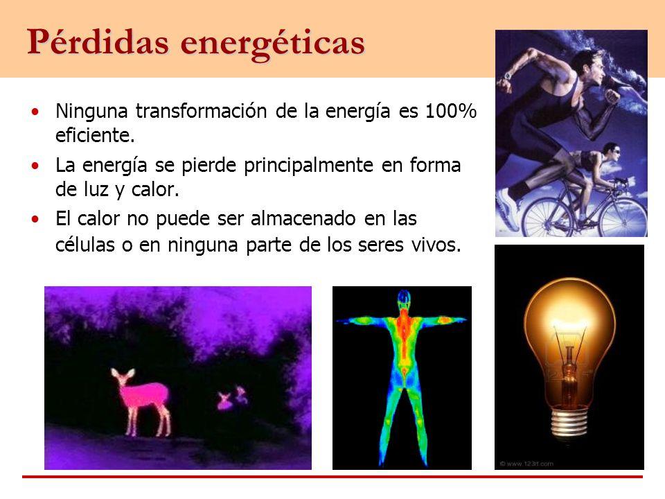 Pérdidas energéticas Ninguna transformación de la energía es 100% eficiente. La energía se pierde principalmente en forma de luz y calor.