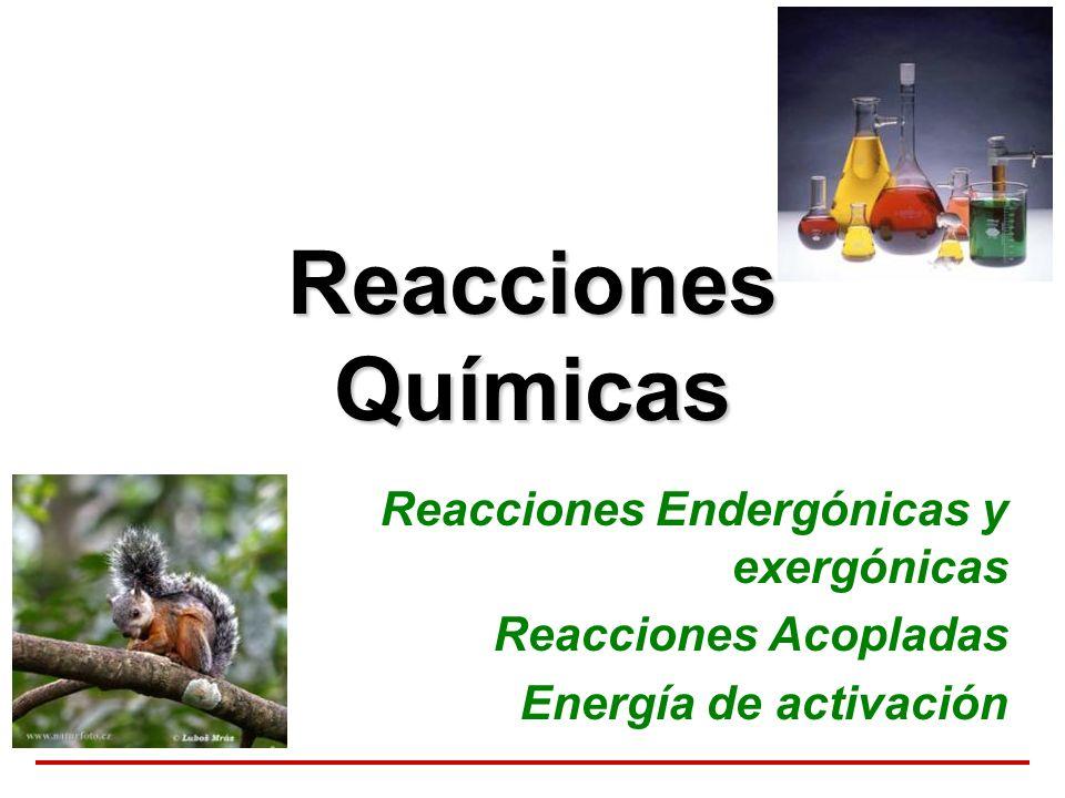 Reacciones Químicas Reacciones Endergónicas y exergónicas