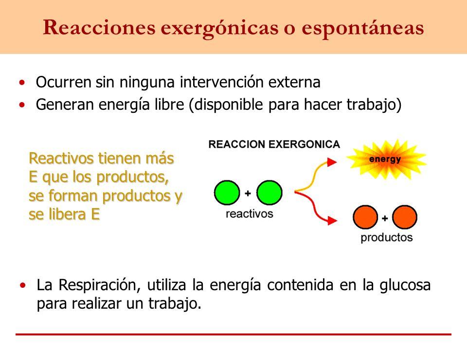 Reacciones exergónicas o espontáneas