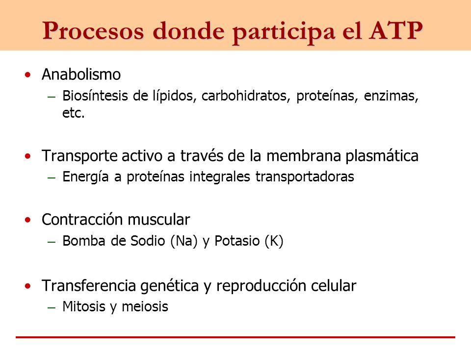 Procesos donde participa el ATP