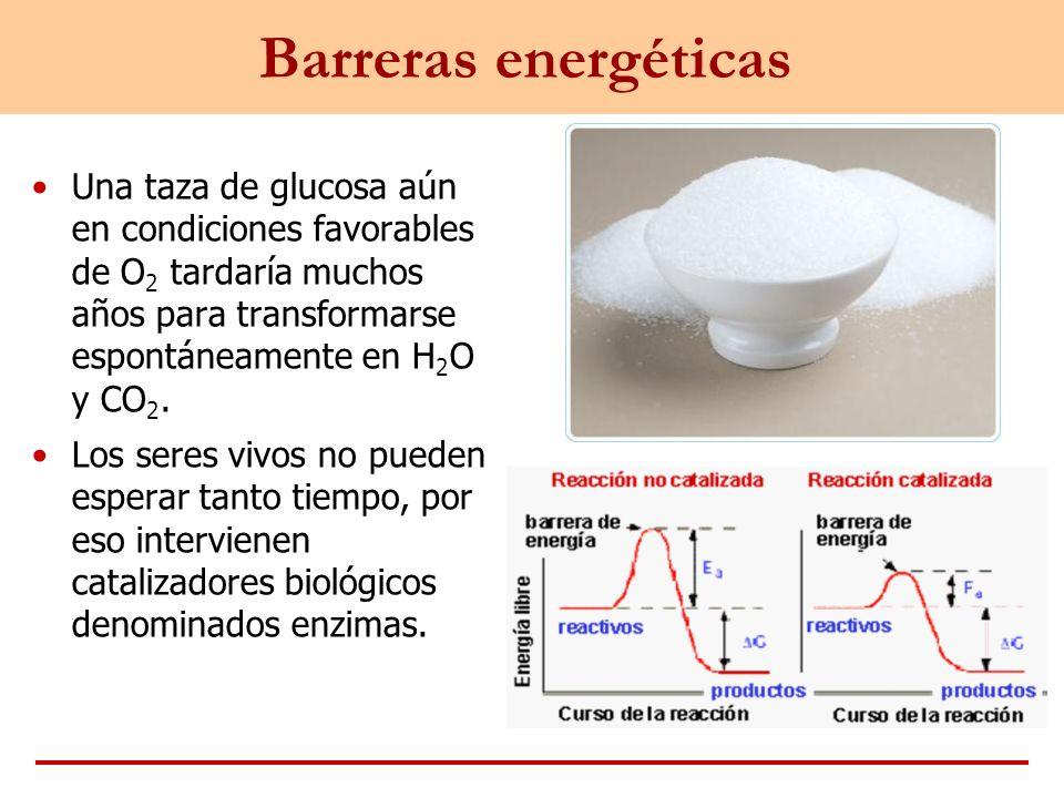 Barreras energéticas Una taza de glucosa aún en condiciones favorables de O2 tardaría muchos años para transformarse espontáneamente en H2O y CO2.