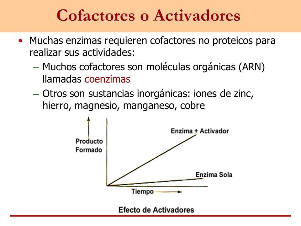 Cofactores o Activadores