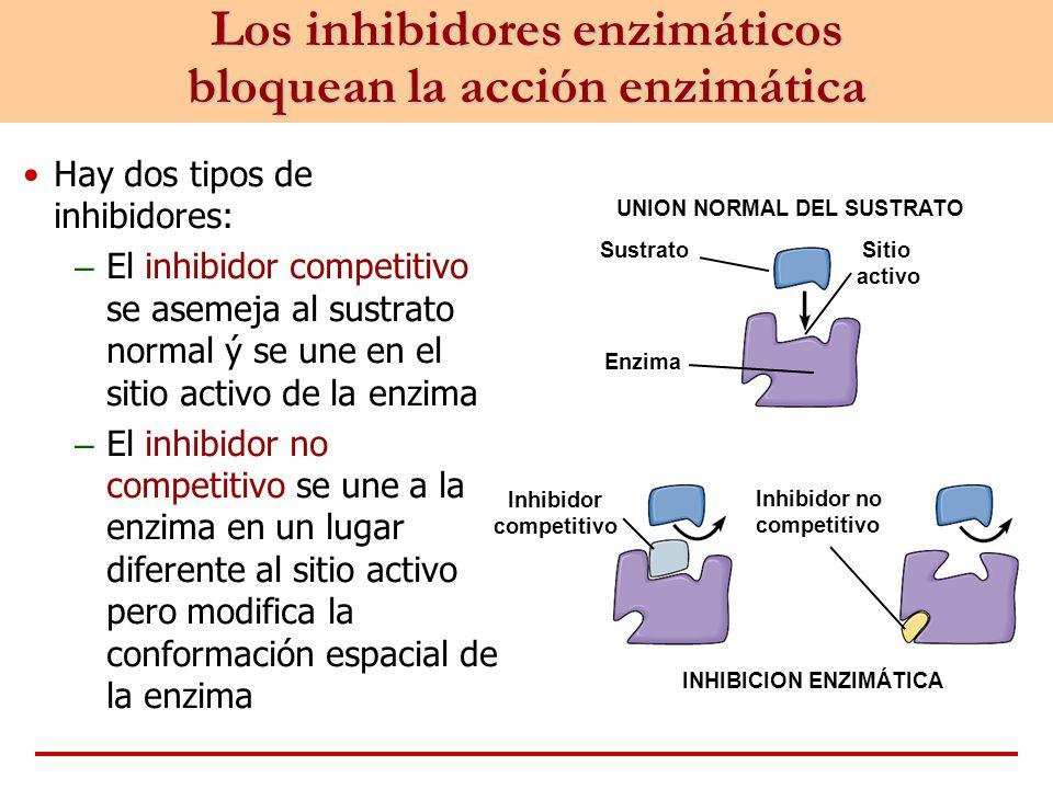 Los inhibidores enzimáticos bloquean la acción enzimática