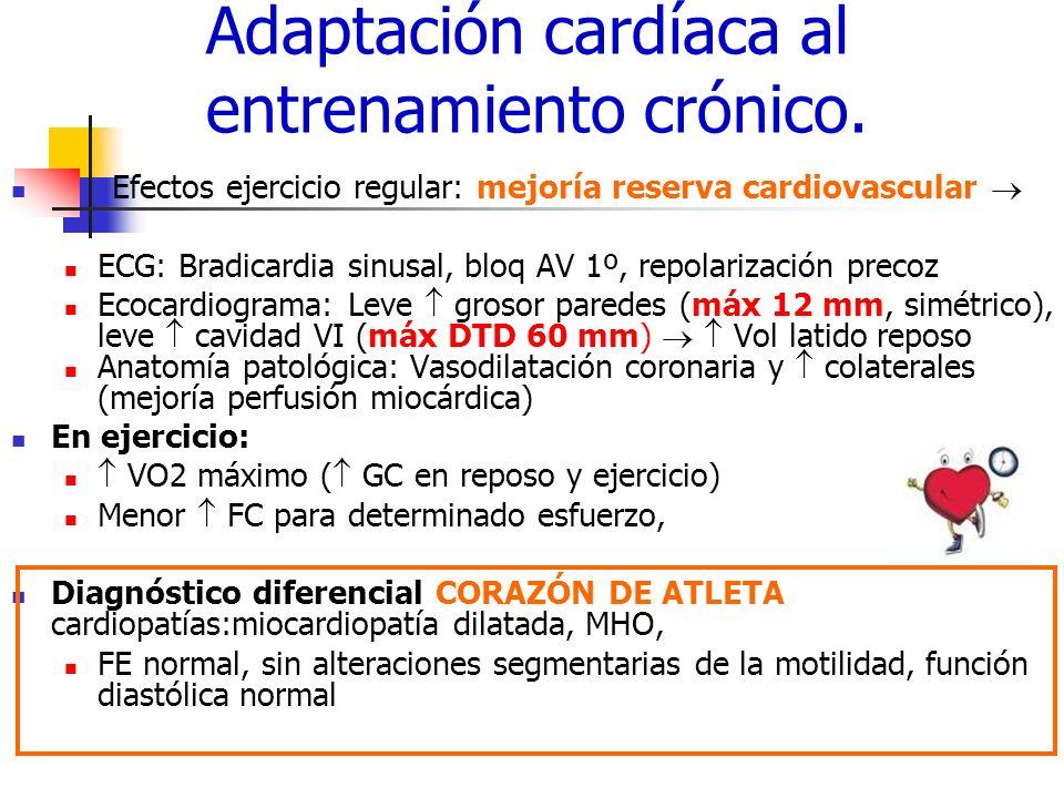 Adaptación cardíaca al entrenamiento crónico.