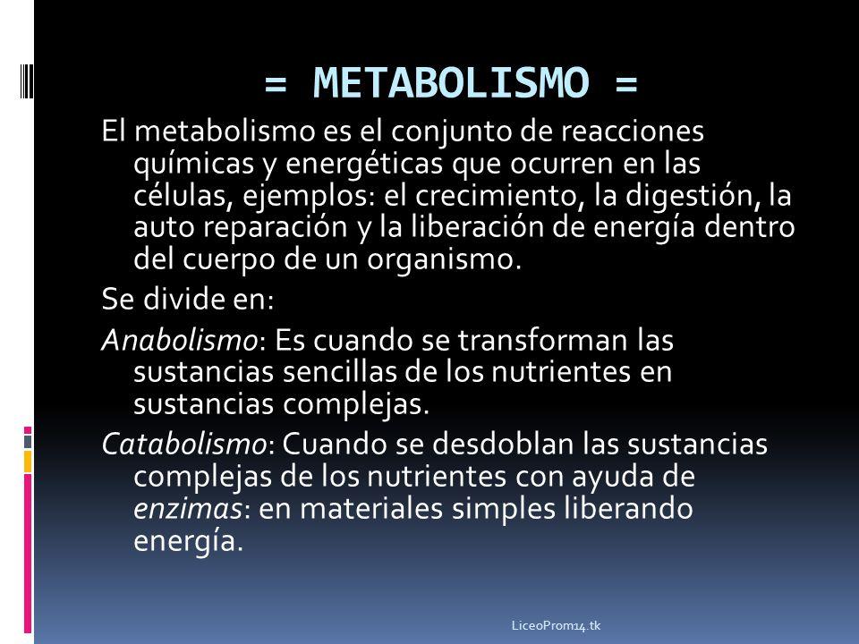 = METABOLISMO =
