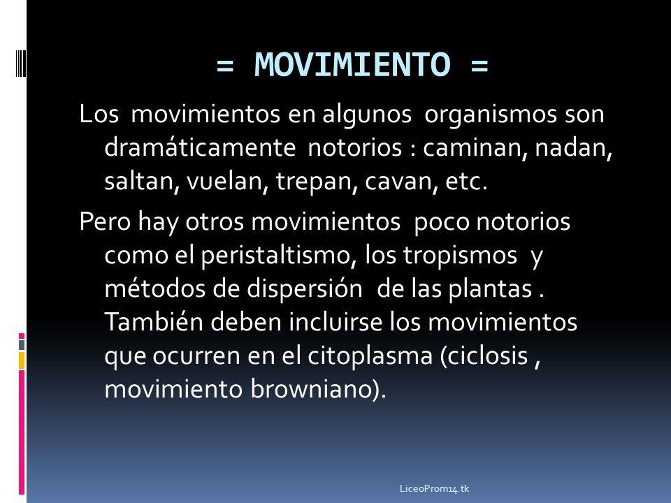 = MOVIMIENTO =