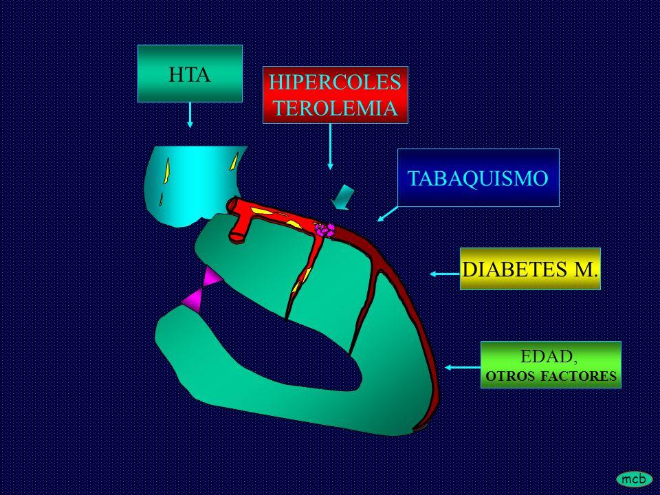 HTA HIPERCOLES TEROLEMIA TABAQUISMO DIABETES M. EDAD, OTROS FACTORES