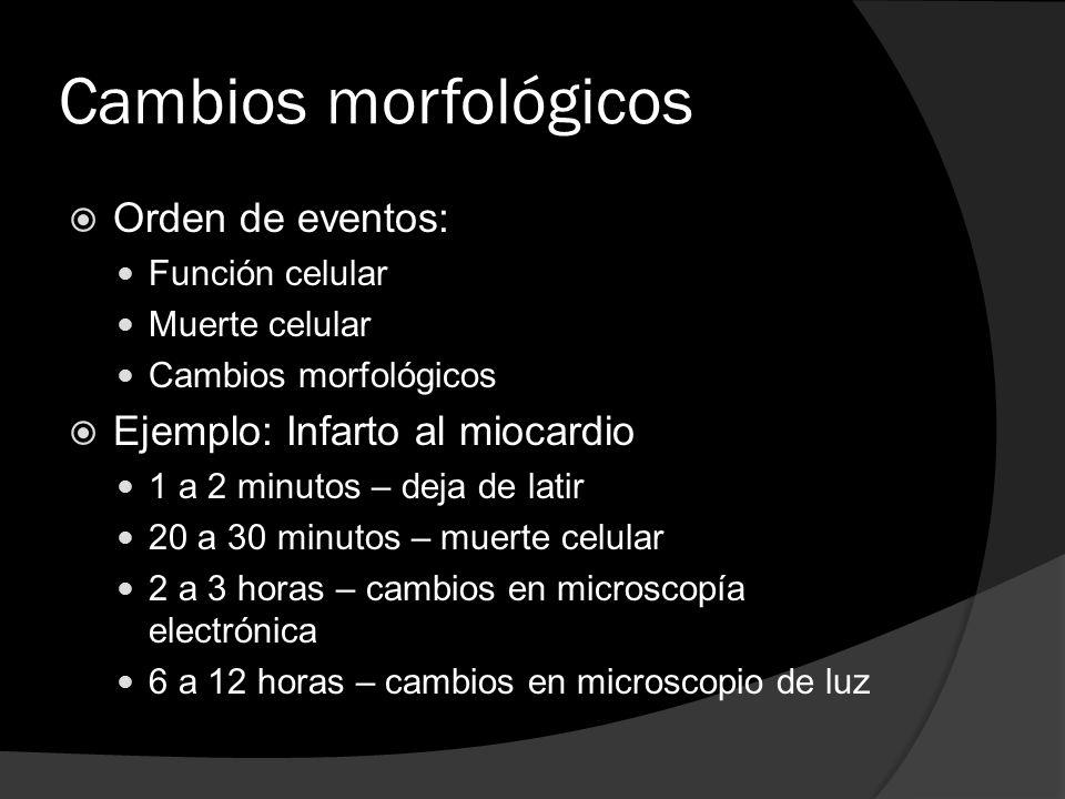 Cambios morfológicos Orden de eventos: Ejemplo: Infarto al miocardio