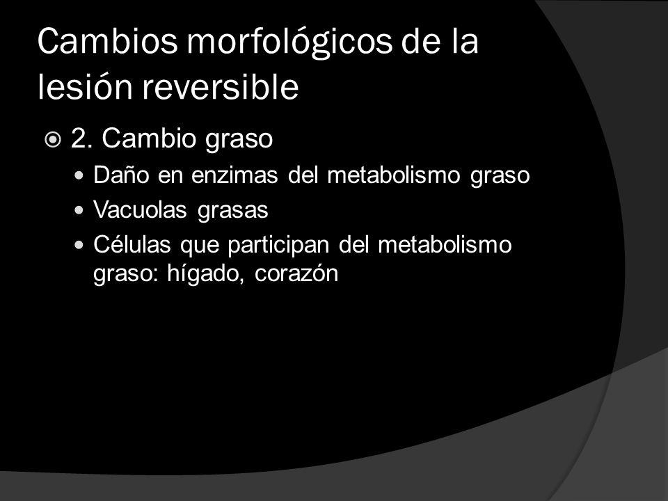 Cambios morfológicos de la lesión reversible