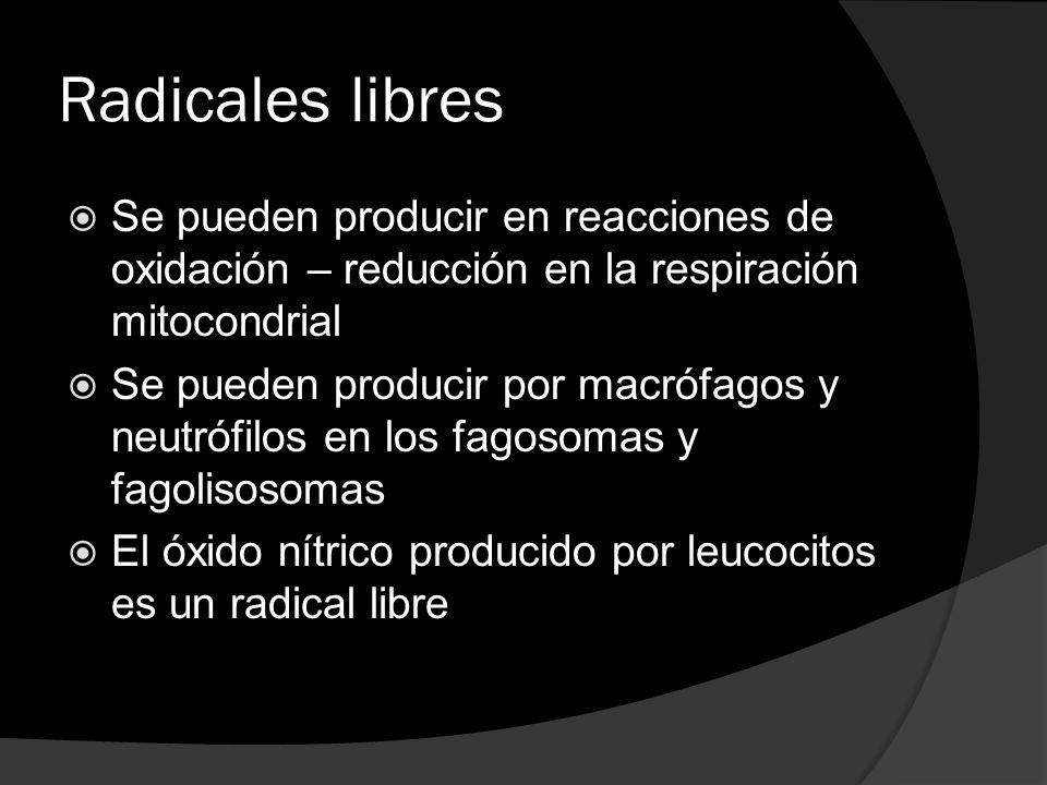Radicales libres Se pueden producir en reacciones de oxidación – reducción en la respiración mitocondrial.