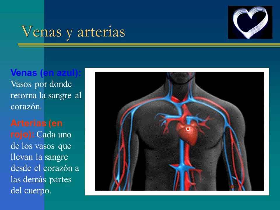 Venas y arterias Venas (en azul): Vasos por donde retorna la sangre al corazón.