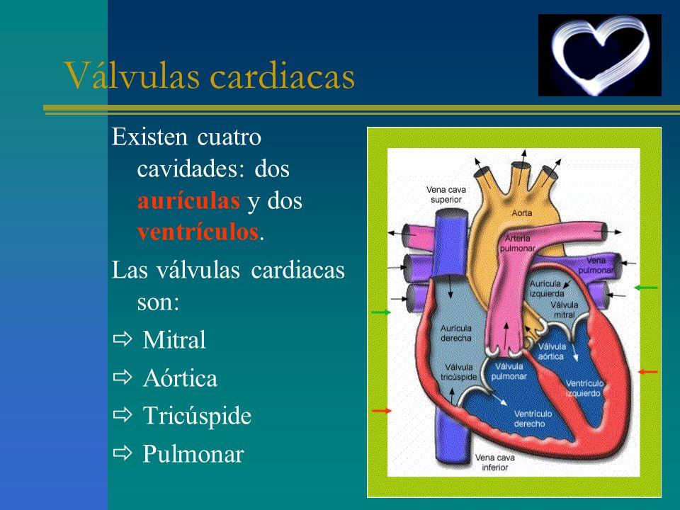 Válvulas cardiacas Existen cuatro cavidades: dos aurículas y dos ventrículos. Las válvulas cardiacas son: