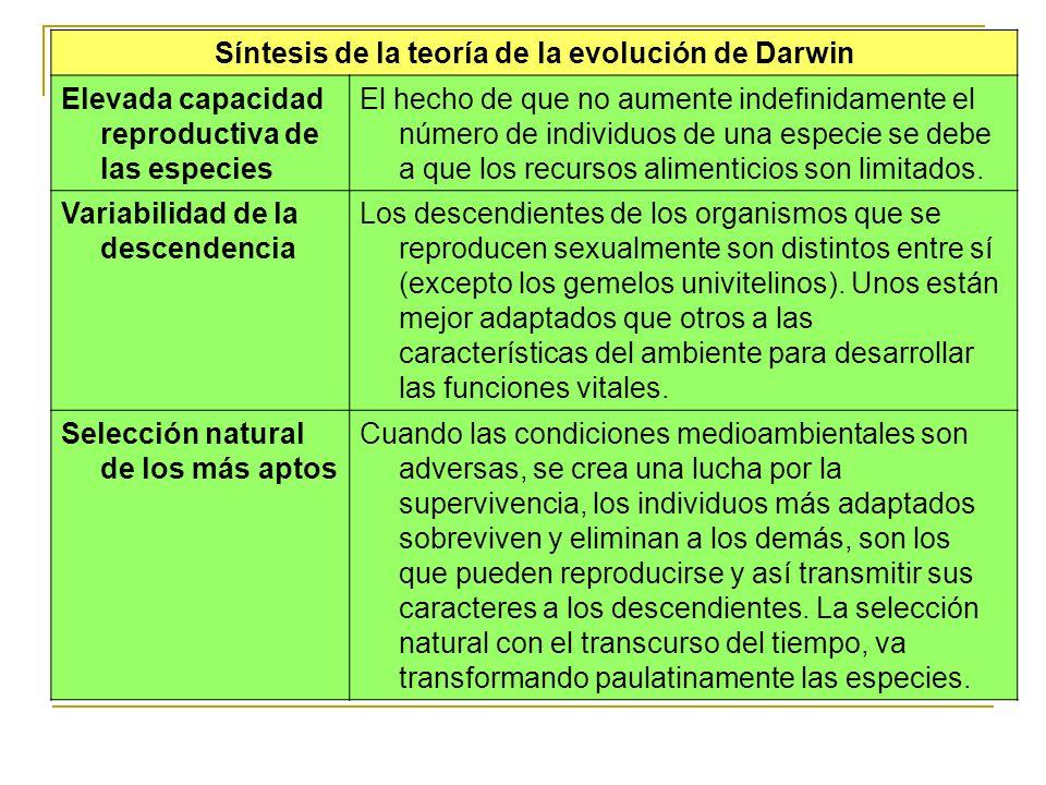 Síntesis de la teoría de la evolución de Darwin